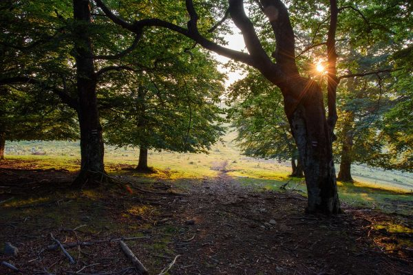 Nature Guardians Competition launches, which aims at encouraging designation of new protected areas and old-growth trees