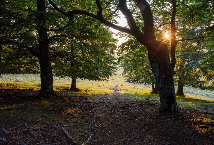 """Read more about the article Започва конкурс """"Застъпници за природата"""" за обявяване на нови защитени територии и вековни дървета"""