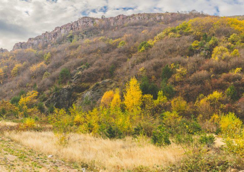 """Три вековни дървета, три природни забележителности и две защитени местности от пет области са отличени в конкурса """"Застъпници за природата"""""""