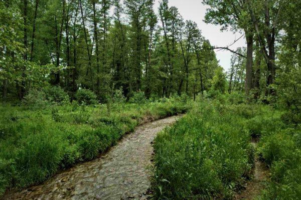"""МОСВ съгласува процедура за обявяване на защитена местност """"Гората на Боряна"""""""