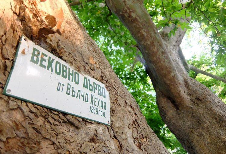 Read more about the article Как да защитим вековно дърво?