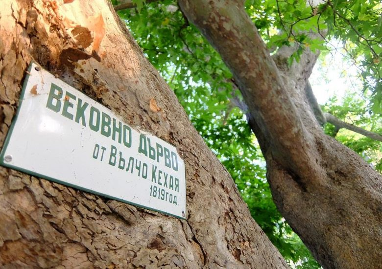 Как да защитим вековно дърво?