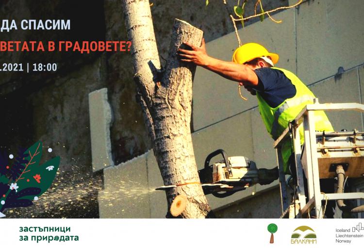 Read more about the article Обучение Как да спасим дърветата в градовете?