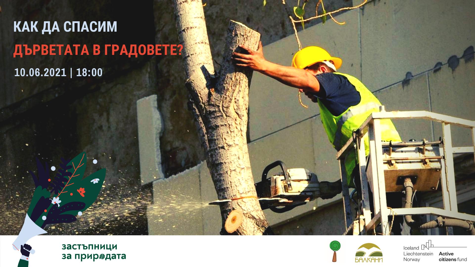 Обучение Как да спасим дърветата в градовете?
