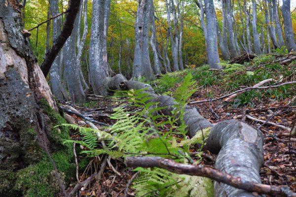 Събираме информация за нови вековни дървета!